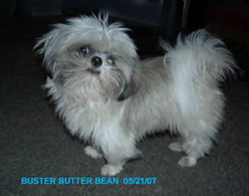 Shawnee Valley Shih Tzu - Imperials & Rare Colors - Southern